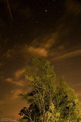 Estrellas de marzo (Mar Cifuentes) Tags: chile longexposure naturaleza lightpainting tree nature stars landscape arbol estrellas cajondelmaipo