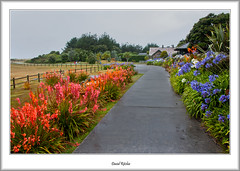 Path To Abbey Gardens (flatfoot471) Tags: summer england holiday landscape cornwall unitedkingdom tresco islesofscilly abbeygardens 2015