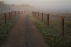 Eastshore park fog (lenswrangler) Tags: california statepark park morning grass fog fence berkeley path meadow dew mclaughlin eastshore digikam eastbayparks ebparks sylviamclaughlin rawtherapee lenswrangler