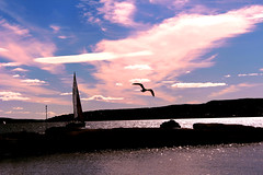 pink (dahlstrom.sara) Tags: sea sky bird love water boat flying sailing happiness depth