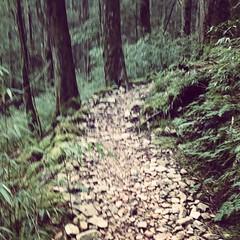 八仙山主峰步道 (linsense1010) Tags: mountain sony cellphone smartphone 八仙山 z3c