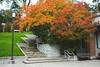 DSC00503 (elenafrancesz) Tags: fall uw campus wordless