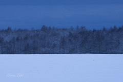 colors of Estonia (henritht) Tags: blue trees white snow black nature by clouds nikon estonia nikkor eesti d610 200500mm ev98 thebluehou eestivabariik98