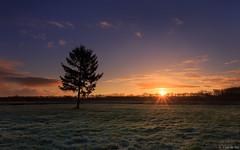 Harksteder sunrise (koos.dewit) Tags: sun tree clouds sunrise canon colours thenetherlands groningen sunrays 2016 harkstede 1740mml leefilters canon6d koosdewit koosdewitnl
