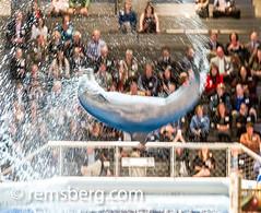 Environmental Portrait photography of Lyle Benson - Baltimore Maryland (Remsberg Photos) Tags: show usa aquarium marine crowd maryland baltimore flip dolphins trick perform nationalaquarium aquaticlife trained
