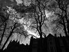 ** (donvucl) Tags: trees sky blackandwhite bw london church silhouette clouds buildings gothic gordonsquare donvucl olympusem1