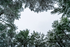 DSC03323.jpg (pbradyinct) Tags: lake snow tree water connecticut crescentlake meriden