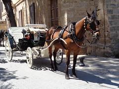 Palma de Maiorca (Antnio Jos Rocha) Tags: espaa spain espanha carro trem mallorca palma turismo cavalo islas baleares turistas palmademallorca rodas maiorca islasbaleares