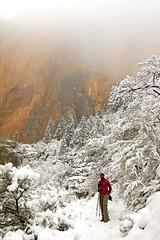 """Springtime"" hike in Zion (BDFri2012) Tags: trees snow cold fog clouds utah nationalpark trail zion zionnationalpark sandstonecliffs americansouthwest desertsouthwest southwestunitedstates emesatrail"