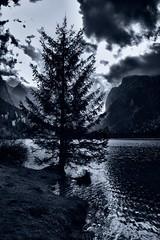 Solitudine (u.giommetti) Tags: sky blackandwhite italy lake tree nature clouds landscape lago europa europe italia nuvole loneliness natura cielo albero montagna montain paesaggio trentino biancoenero solitudine