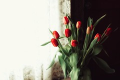 sunbathing (s@ssyl@ssy) Tags: flowers red window tulips lace hww mygardenshed windowwednesdays
