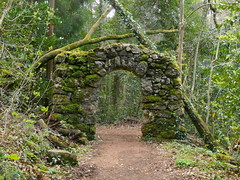 Arch in the woods (rgrant_97) Tags: flowers verde green portugal nature forest natureza centro fungus mata bussaco aveiro buçaco