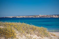 2016-04-09_IMG_3658 (talentfrei79) Tags: espaa primavera canon mar spain mediterraneo abril espana april formentera islas spanien mediterrneo baleares frhling balearen balears 2016 mittelmeer illes 50d pityusen
