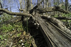 _DSC8092 (wh0c4rez) Tags: leesburg mophotos ashburnva redrockoverlook