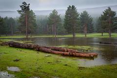 Laguna de La Nava (Manuel Fdez) Tags: espaa flora agua nikon europa arboles laguna pinos tronco larioja 2016 lanava d3200 lumbreras