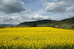 Land of Alsace (annalisabianchetti) Tags: france clouds landscapes countryside campagna alsace land alsazia