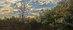 Spring! (ChemiQ81) Tags: plant flower tree spring blossom outdoor poland polska polish foliage polen polonia kwiaty jaro pologne wiosna kwiat 2016  polsko  puola plland lenkija pollando wiosenny   poola poljska polija pholainn     chemiq polanya lengyelorszgban