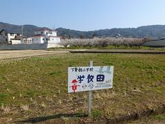 16i5233 (kimagurenote) Tags: apricot ume  japaneseapricot  prunusmume sogabairin   odawarakanagawa