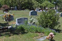 At Parker Memorial Cemetery Grapevine Texas (People, Places & Things) Tags: cemetery memorial texas parker grapevine