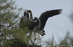 _DSC0361 (chris30300) Tags: france heron de pont parc oiseau camargue gau saintesmariesdelamer flamant provencealpesctedazur ornithologique