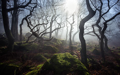 Resurgens (J C Mills Photography) Tags: wood morning trees light england mist forest woodland landscape moss spring oak rocks derbyshire peakdistrict boulders gritstone sessileoak