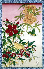 Scarlet rose mallow, sunset hibiscus, rose balsam and canary (Japanese Flower and Bird Art) Tags: sunset flower bird art rose japan scarlet print japanese hibiscus mallow canary malvaceae canaria impatiens woodblock balsam fringillidae ukiyo serinus balsaminaceae balsamina coccineus manihot readercollection