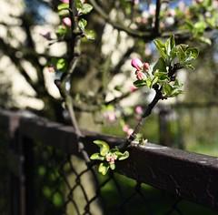 hff (summer_57) Tags: bokeh poland polska april hff 1435 fencefriday nikond750