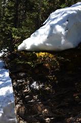 Melting Mountain Snow (pokoroto) Tags: mountain snow canada spring melting alberta april 2016  4  uzuki  shigatsu  unohanamonth 28