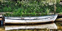 Scruffy wee boat (Graham Paton) Tags: scruffy unioncanal rowingboat