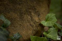 Trepadeira (Heike Knebel) Tags: natureza pedra trepadeira eraplanta