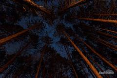 Above the Campfire (kevin-palmer) Tags: statepark trees winter sky orange pine night forest dark stars fire illinois warm glow clayton january campfire backpacking astrophotography astronomy starry adamscounty siloamsprings astrometrydotnet:status=failed siloamspringsstatepark tokina1628mmf28 nikond750 redoakbackpacktrail astrometrydotnet:id=nova1412006