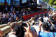 20160206-08-Running of the Wools crowd (Roger T Wong) Tags: city travel newzealand summer people sheep crowd merino nz southisland otago queenstown 2016 sony2470 rogertwong sel2470z sonyfe2470mmf4zaosscarlzeissvariotessart sonya7ii sonyilce7m2 sonyalpha7ii runningofthewools