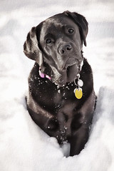 There's Too Much Snow Daddy (NYRBlue94) Tags: winter portrait snow island frozen long bailey pup blizzard twittertuesday