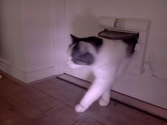 20160210-115032-i-1 (Catflap central) Tags: camera dog pet cats woof cat pi raspberry meow doggie catdoor catflap kattenluik katzenklappe catflapj2nnl taggingasdoguntilautotagginghasanoptout robotaggingisthedevil
