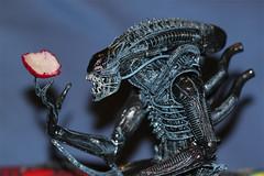 Hans-Ruedi, my xenomorph (Estellanara) Tags: blue 2 alien warrior series giger neca xenomorph