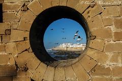 Essaouira - Morocco (ValeCrio) Tags: travel sea canon seagull morocco marocco viaggio essaouira reportage valeriocolantoni