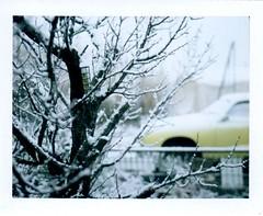 apricot tree and ghia, feb 1 (EllenJo) Tags: arizona snow tree polaroid birdfeeder hazel apricot fruittree winterstorm landcamera snowymorning verdevalley polaroidlandcamera instantfilm january31 suetfeeder fujifp100c fujiinstantfilm clarkdalearizona polaroidpathfinder rollfilmcameraconvertedtopackfilm convertedpathfinder