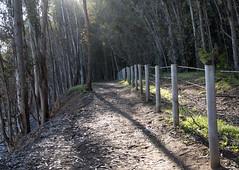 San Simeon Point Trail (Joe Josephs: 2,600,180 views - thank you) Tags: california walking hiking trails photojournalism sansimeon fineartphotography californiacentralcoast pacificcoasthighway californialandscape outdoorphotography sansimeoncalifornia fineartprints joejosephs joejosephsphotography