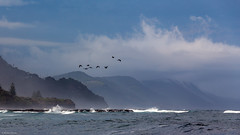 Weather terns (The Photo Smithy) Tags: landscapes seascapes sydney australia illawarra coledale sharkpark