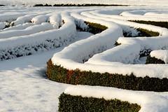 Groer Garten (frodul) Tags: park schnee winter deutschland hannover baum gegenlicht sonnenschein niedersachsen symmetrie herrenhausen barockgarten rabatte herrenhusergarten ziergarten grosergarten