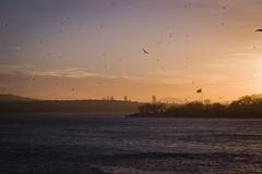 Landscape (agata renata) Tags: city travel turkey istanbul document streetphoto reportage turcja stambu