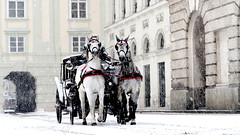 Schneigh (Fat Alan) Tags: vienna wien winter horses horse snow cold monochrome cheval carriage pferd prater vienne chevaux horseandcarriage horseandtrap fatalan