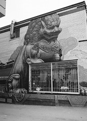 Chinatown Lion (Georgie_grrl) Tags: blackandwhite toronto ontario window restaurant alley mural chinatown chinese lion pentaxk1000 diners dundasstreetwest rikenon12828mm ilfordasa400