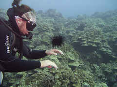 Divemaster playing with sea urchin (Yuxuan.fishy.Wang) Tags: hawaii us unitedstates scuba diving kailuakona