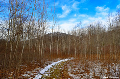 Pathway through the woods (mswan777) Tags: trees winter sky snow cold nature clouds forest woods nikon outdoor hiking michigan dunes scenic trail 1855mm wilderness nikkor pathway d5100