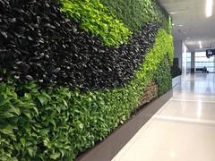 24/365 - Living Wall At Detroit Airpor