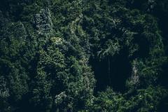 Cueva entre verdes (cmenesese) Tags: chile lake nature landscape lago volcano ray villarrica panguipulli calafquen lican