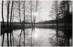 pond (Rainer Schlepphorst) Tags: trees blackandwhite nature water analog germany d76 apx100 brandenburg nikonf3 2835 filmisnotdead