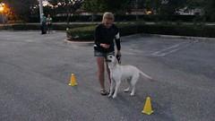 Dog Obedience Graduation (6) (marlinsgirl93) Tags: 2016 dogobedience 10millionphotos wellingtonfl