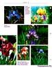 Комнатные и садовые растения от А до Я 62 15
